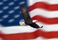 Flugwesen des kahlen Adlers vor der amerikanischen Flagge stockbild