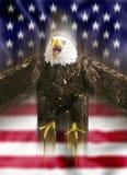 Flugwesen des kahlen Adlers vor der amerikanischen Flagge Lizenzfreies Stockbild