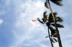 Flugwesen-Drachen Stockfotografie