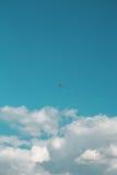 Flugwesen-Drachen lizenzfreie stockfotografie