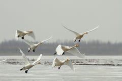 Flugwesen-weg vom Eisfluß Stockbild