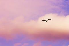 Flugwesenseemöwe Stockfotos