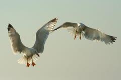 Flugwesenvögel Stockbild