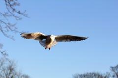 Flugwesenvögel im Himmel stockbild