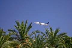 Flugzeug über Palmen lizenzfreie stockfotografie