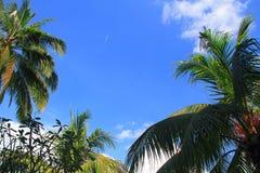Flugzeug beim Flighning zwischen Palmen Stockfotos