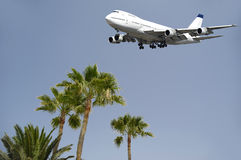 Flugzeug und Palmen Lizenzfreie Stockfotos