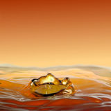 Fluidez dourada de gotejamento, uma coroa da água imagens de stock