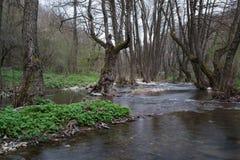 Fluir el río en bosque de la primavera en Strandzha, Bulgaria Imagenes de archivo