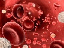 Fluir sangre con los platletes y los leucocitos Fotos de archivo libres de regalías