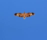 Fluitende Vlieger Stock Foto