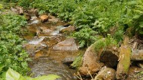 Flujo abajo del agua potable a trav?s de piedras en ca?da del agua del bosque fotografía de archivo