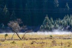 Flujo blanco puro debajo de los pinos, Jiuzhaigou, Sichuan, China de la niebla Fotografía de archivo