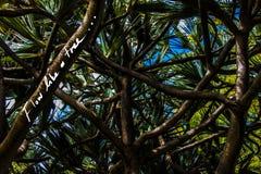 Flujo como un árbol Lema de la escritura en una foto imágenes de archivo libres de regalías