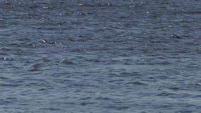 Flujo de agua en el día de verano del río metrajes