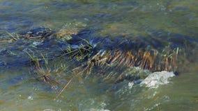 Flujo de agua en el primer del río metrajes