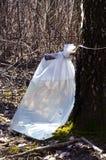Flujo de la bebida de la savia del árbol de abedul al bolso de polietileno Foto de archivo