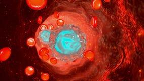 Flujo de sangre en cuerpo humano ilustración del vector