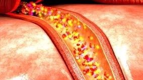Flujo de sangre en cuerpo humano metrajes