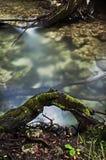 Flujo del río bajo raíz grande del árbol Imagen de archivo