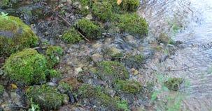 Flujo del río en el bosque durante el d3ia metrajes