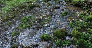 Flujo del río en el bosque durante el d3ia almacen de video