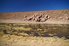 Flujo del río en el desierto de Atacama Fotos de archivo libres de regalías