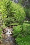 Flujo del río en paisaje de las montañas de la primavera Imagen de archivo libre de regalías