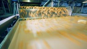 Flujo rápido de patatas a la inglesa a lo largo del transportador del metal almacen de metraje de vídeo