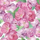 Flujo sólido de las rosas y de las peonías de Aqwarelle stock de ilustración