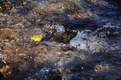 Flujo tranquilo del río fotos de archivo