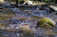 Flujos de corriente de la montaña foto de archivo libre de regalías