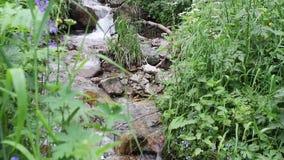 Flujos de corriente tranquilos del bosque suavemente a trav?s de un prado verde con las flores almacen de metraje de vídeo