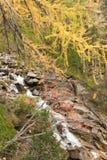 Flujos de una corriente abajo del bosque en la caída Imágenes de archivo libres de regalías