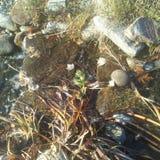 Flujos de una corriente sobre rocas foto de archivo libre de regalías