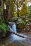 Flujos del arroyo de la primavera abajo en un registro En el bosque portugués Monchique Imagen de archivo libre de regalías