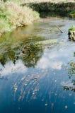 Flujos del río Foto de archivo libre de regalías