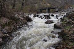 Flujos del río de la montaña en la primavera en el bosque rápidamente imágenes de archivo libres de regalías