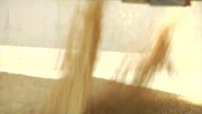 Flujos del trigo y del grano en el contenedor de almacenamiento metrajes