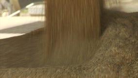 Flujos del trigo y del grano en el contenedor de almacenamiento almacen de metraje de vídeo