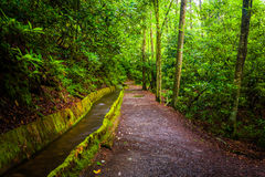 Flume and trail at Mingus Mill, Great Smoky Mountains National P Royalty Free Stock Photography