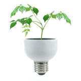 Fluorescent bulb and greens Royalty Free Stock Photos
