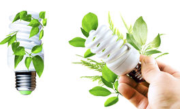 Fluorescent bulb with various green leaves in a hand Stock Photos