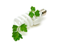Fluorescent energy saving light bulb. With green plant on white background Stock Image