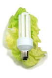 Fluorescent light bulb. On leaves of salad Royalty Free Stock Photography