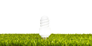 Fluorescent light bulb on grass  over white Stock Photography