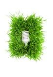 Fluorescent lightbulb on grass Royalty Free Stock Image