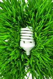 Fluorescent lightbulb on grass Stock Photos
