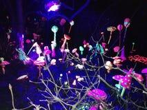 Fluro mushrooms u. V royalty free stock photo