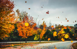 A flurry of leaves. Created by the wind Royalty Free Stock Photography